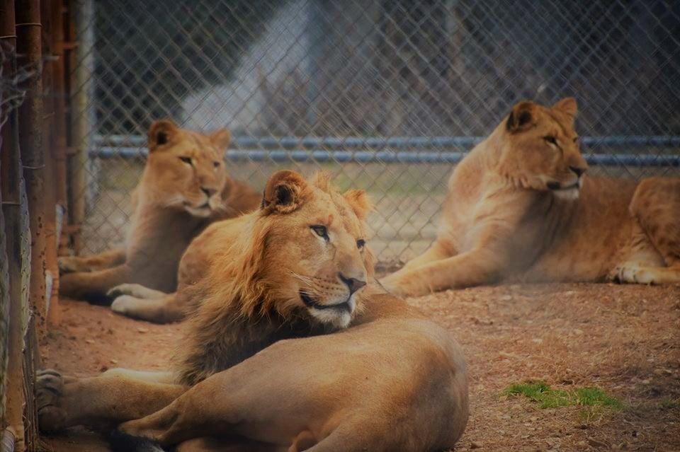 Cedarhill Animal Sanctuary in Caledonia, MS