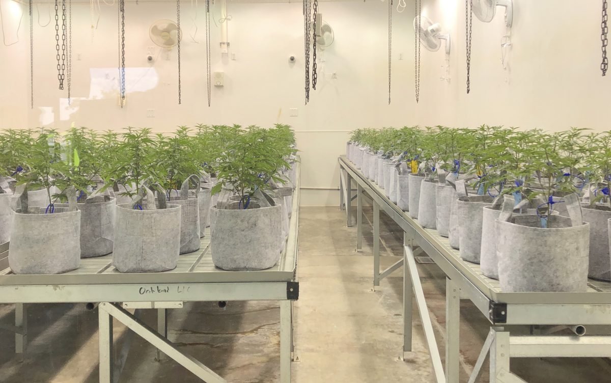 Perry of the State Health Board looks to keep medical marijuana illegal